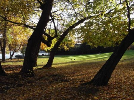 秋の散歩03