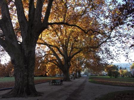 秋の散歩06