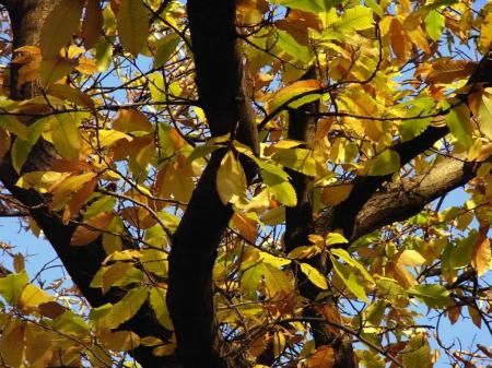 秋の散歩07