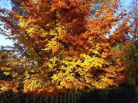 秋の散歩08