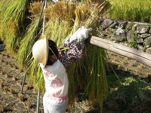 2009.稲刈り (3)