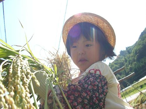 2009.稲刈り (2)