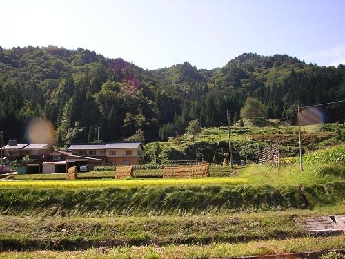 2009.稲刈り