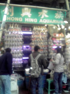 香港金魚店1