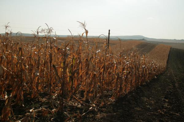 kalotaszeg201110 425