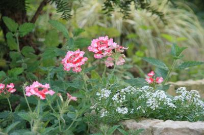 2009-10-04_76.jpg