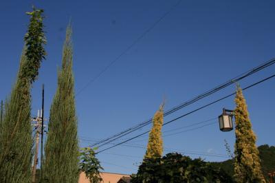 2009-10-10_63.jpg