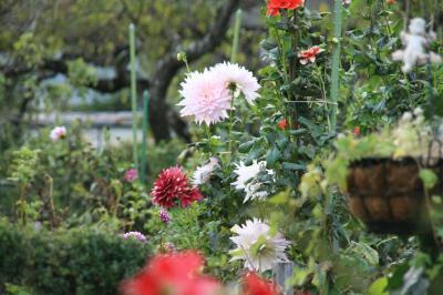 2009-10-12_23.jpg
