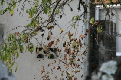 2009-10-18_34.jpg
