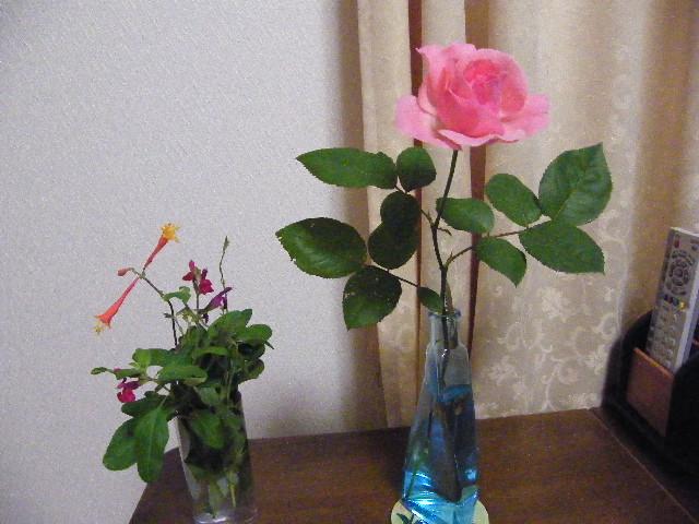 バラの一輪ざし2