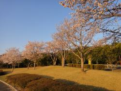 大分の桜20110406-2