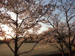 大分の桜20110406-5