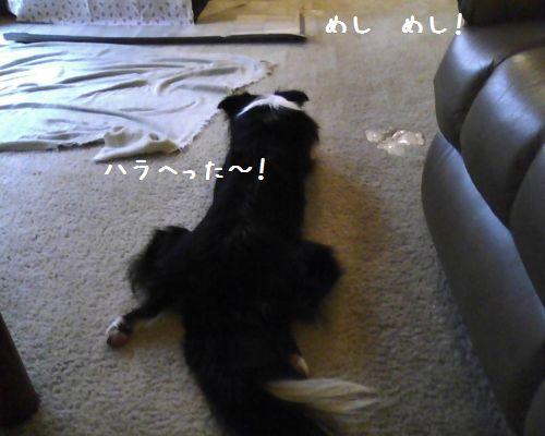 Photo06181750_1.jpg