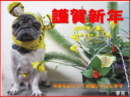 寅ディオから「おれはパグ犬や~~。今年もよろしく」
