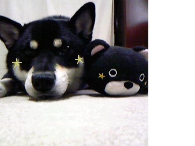 snap_ko6ku6_2009106101350.jpg