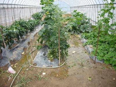 2010年 7月 野菜