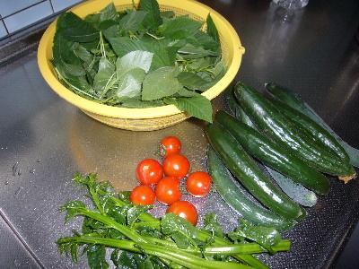 2010年野菜