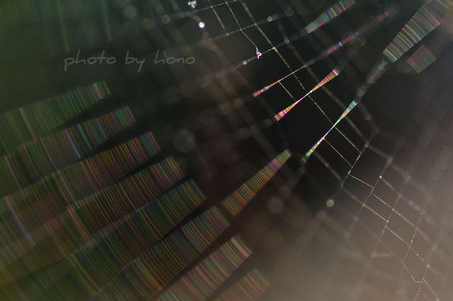 20110709-5_picnik.jpg