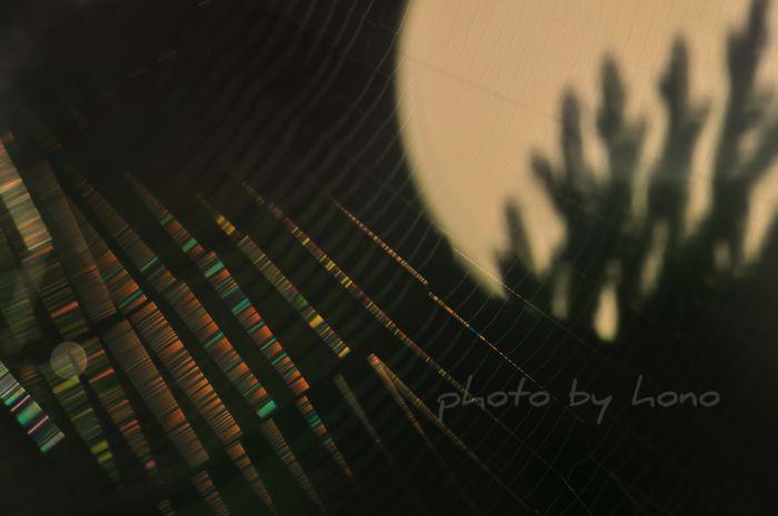 20110719-11_picnik.jpg