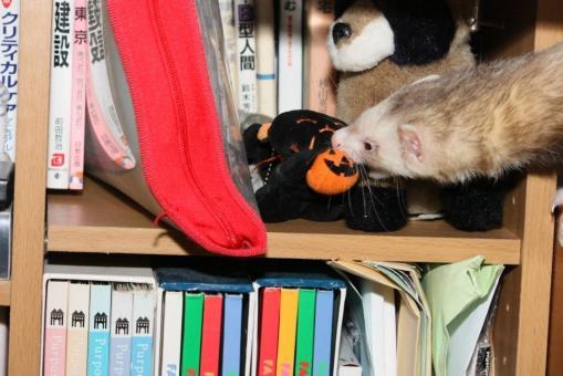 ハロウィンの猫を拉致!