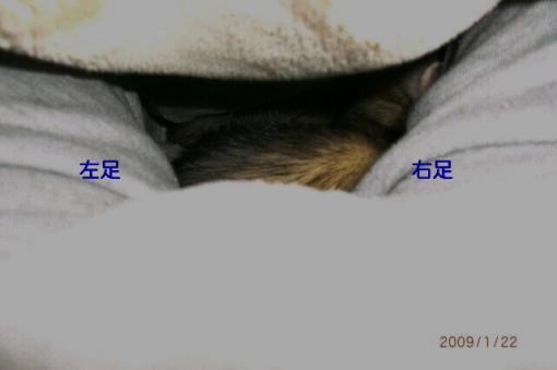 股の間で寝るジャック