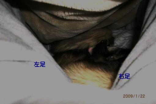 股の間で寝るジャック&モモ