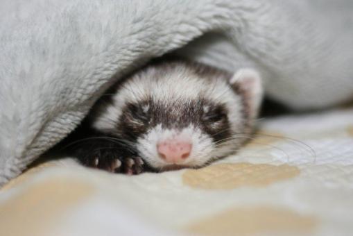 寝起きのジャック1