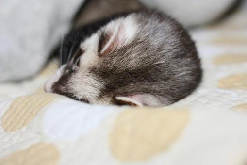 寝起きのジャック6