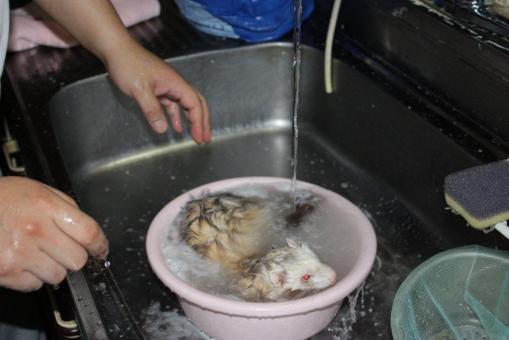 モモちゃんのお風呂1