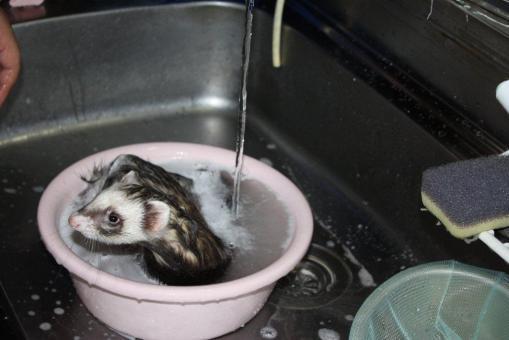 ジャックのお風呂