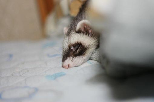 頭を垂れて寝るジャック4