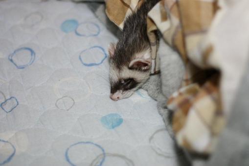 頭を垂れて寝るジャック3
