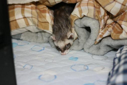 頭を垂れて寝るジャック1