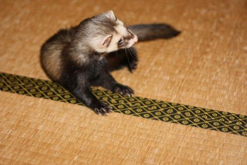 ジャック、畳の上で
