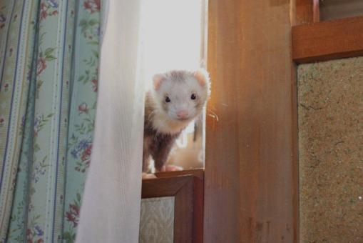 2階で待つモモちゃん2