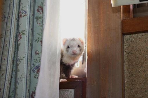 2階で待つモモちゃん1