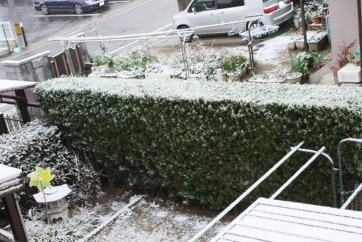 初雪2階からの様子(シャッター速度高速)