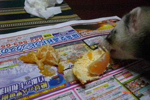 みかんが大好き4(まだ食べたいです!)