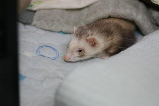 寝起きのモモちゃん2
