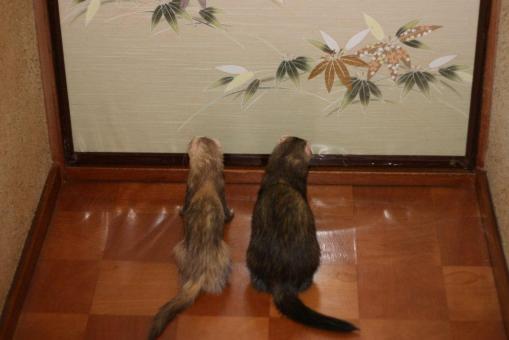 開かずの扉で待つジャック君とモモちゃん♪