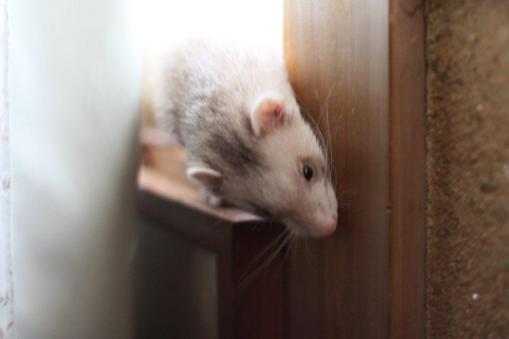 窓際で遊ぶモモちゃん♪