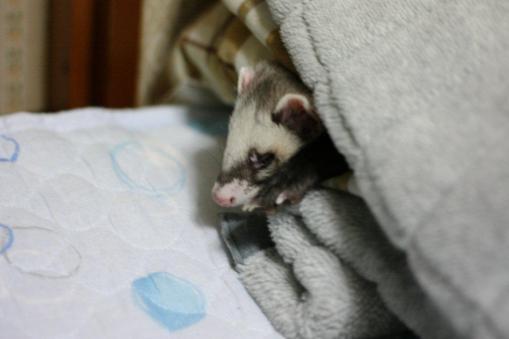 枕元で寝んね2