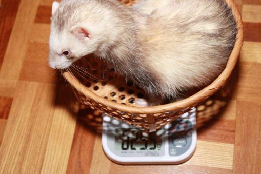 4月3日体重測定(モモ)