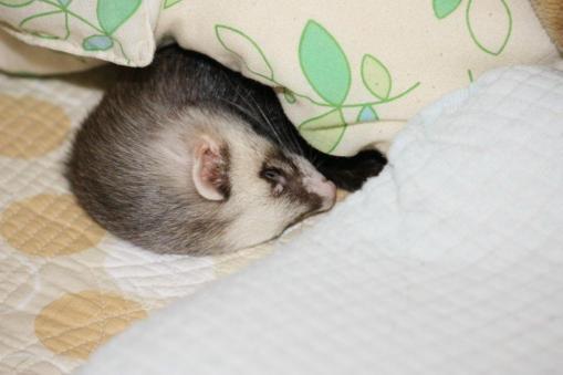 枕元で寝んね1