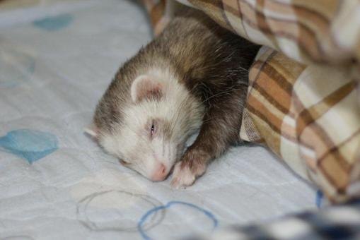 発作後に枕もとで寝んね♪