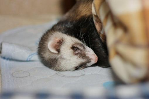 枕元で寝るジャック♪