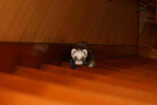 階段を全力で登るジャック君♪