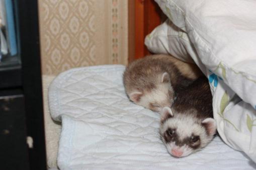 仲良く寝んね♪