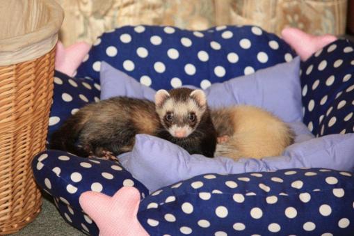 モモちゃん、受診後の夜に仲良く寝んね2