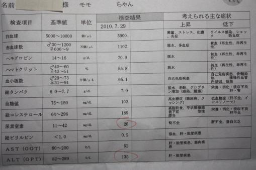モモちゃん、7月29日受診採血結果(体重940g)